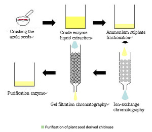 Purification of plant seed derived chitinase